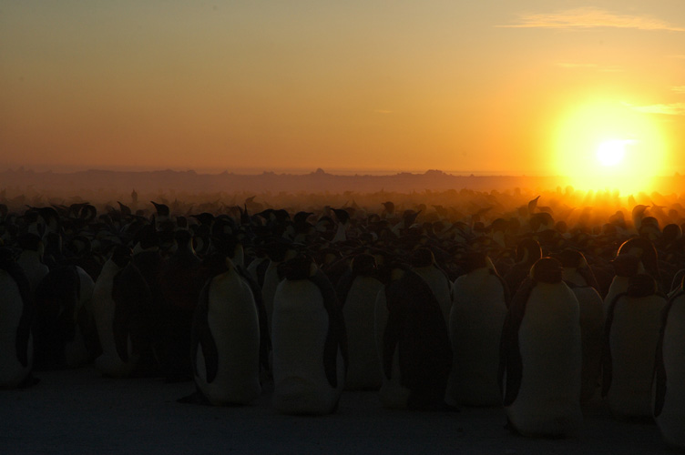 The sun behing the emperor penguin colony (yes, but it's pretty)