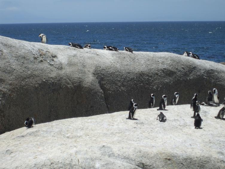 where even penguins sunbathe