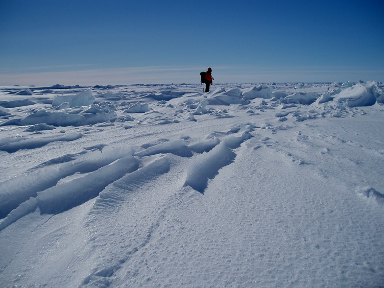 Bob looks out over the sea ice