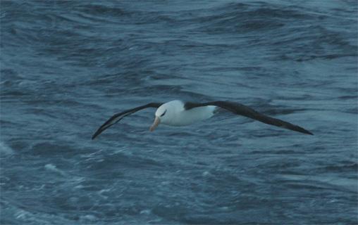 Bird swooping