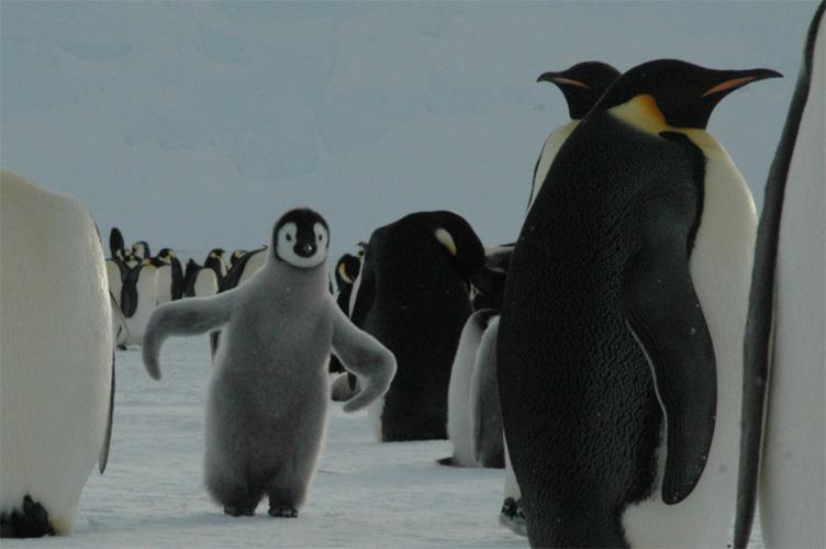 Chick tap-dancing
