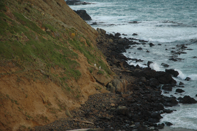 Penguins and hiding fur seals